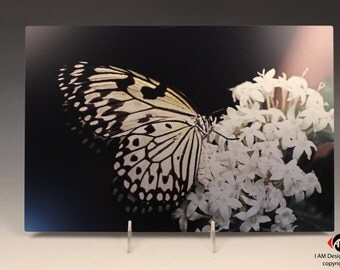 Paper Kite Butterfly on Brushed Aluminum