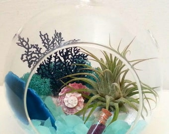 Large Air Plant Terrarium Kit Hanging Air Plant Terrarium Carribbean Vacation Father's Day Gift Birthday Gift Thank You Gift
