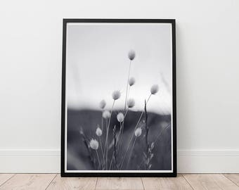 Nature Wall Art- Fine Art,  Black and White Photography, Field flowers, Digital download, Printable Art, South African nature, Home decor