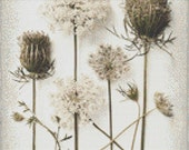 Cross Stitch Pattern Queen Anne's Lace Flower, Flower Cross Stitch Pattern, Nature Cross Stitch Pattern, Wildflower Cross Stitch