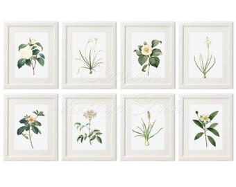 Floral Wall Art, Botanical Printable Set White Flower Print Botanical Prints Set of 8, Wall Art INSTANT DOWNLOAD Digital Illustrations 2525