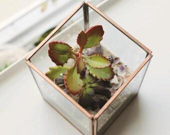Succulent Terrarium - Glass Terrarium - Terrarium Kit - Copper Terrarium - DIY Terrarium - Gift For Her - Succulent Kit