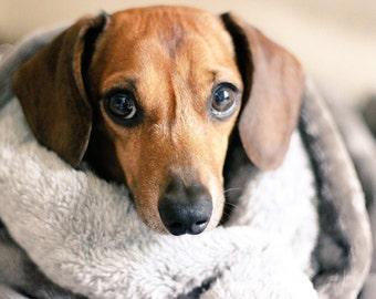 Deluxe Dog Snuggle Sack/ Dog Bed/Dog Blanket/ dog sleeping bag/ velour fleece/pet sleeping bag/ dog blanket/velour fleece/teddy fleece/cosy