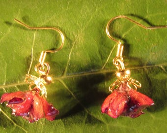 Color earrings gold