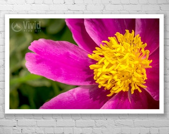 Flower art, peony decor, framed peony print, macro photography, pink and yellow, large wall art, multi panel flower art, matted and framed