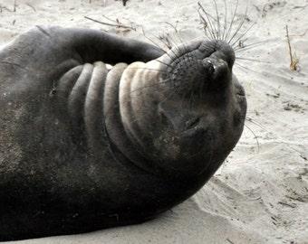Seal lion, seal #2 photo