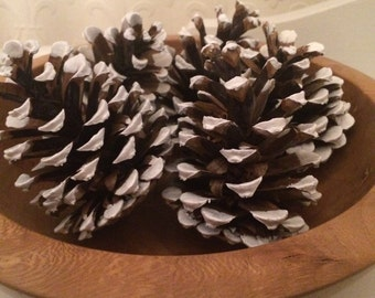 White-tipped pine cone decorations Christmas/Autumn/Halloween