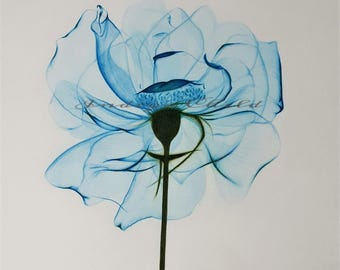Art Drawing Turquoise X-Ray Flower Drawing