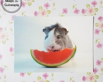 Mieps watermelon 'omnomnomnomnom' guinea pig postcards (5 cards)