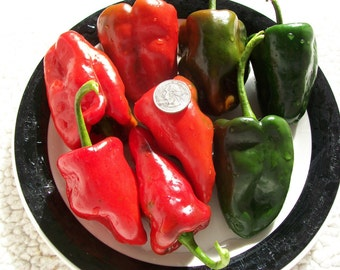 Hot Pepper- Ancho San Luis- 78 day- 4,000 scovilles- mildly hot- 25 seeds per pack