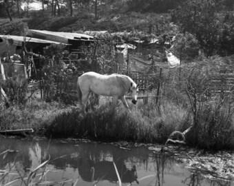 Horse in Comporta- digital print