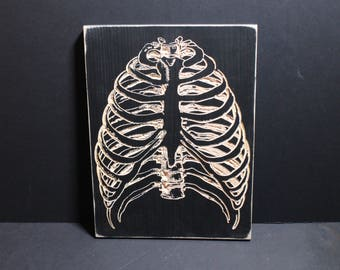 Rib Cage Carved in Wood | Skeleton Bones Scientific Diagram X-Ray Spine Vertebrae Spinal Column Sternum Medical Book Hospital