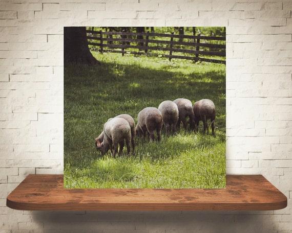 Sheep Line Photograph - Fine Art Print - Home Wall Decor - Farm House Decor - Rustic Wall Art - Animal Photography - Nature - Country - Gift