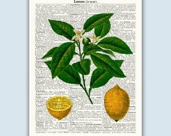 Lemon Poster, Botanical Print, Fruit Art, Kitchen Art, Lemon Art, Kitchen Print, Lemon Decor, Kitchen Wall Art, Kitchen Decor, Educational