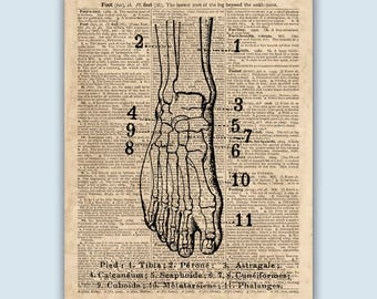 "Foot Anatomy Print, Human Foot Poster, old dictionary page reproduction featuring the word ""FOOT"" on Antiqued Paper, Educational  anatomy"
