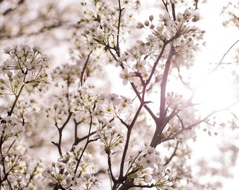 bloom, flowers in the spring, sunny day, tree, fine art print, canvas