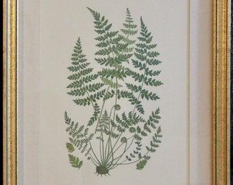 036 - Budding plants - B