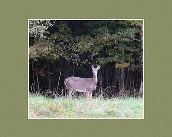 Curious Doe - Matted Print