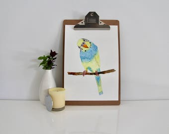 Watercolour Budgie Print, Blue, Yellow, Watercolour Print, Budgerigar Illustration