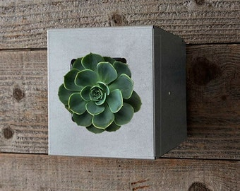 Vertical Wall Plant Holder