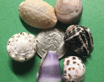Adorable misc. shell lot - hand picked in Hawaii