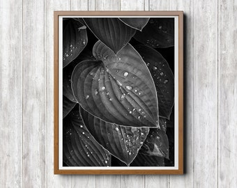 Black and White Abstract Photography, Black and White, Print Download, Leaves Leaf Photography, Nature Rain Drops, Home Office Hotel Decor