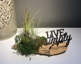 Live Airplants, Driftwood Airplant Decor, Driftwood Decor, Airplant Decor, Live Tillandsia, Air Plant Table Decor, Made In Canada