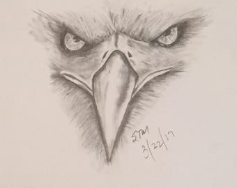 Eagle Eye (Charcoal Pencil) Framed & Matted