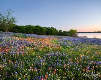 "Bluebonnet Photo Print | ""Bluebonnet Hill"" | Texas Bluebonnets Wall Art | 2017 Texas Bluebonnet Field - Bluebonnet Picture - Texas Art -"