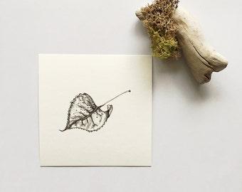 Leaf - Print