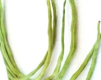 Thai Yard Long Bean Vigna unguiculata sesquipedalis Fabaceae 20 Seeds ThaiGardener