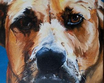 Dog Portrait 12x12 Realistic Colors