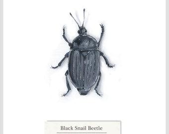 Black Snail Beetle - Print - Original Acrylic Painting - 15.6 x 15.6cm