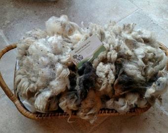Black & White Jacob Sheep Raw Skirted Fiber Fleece Wool - 10 oz