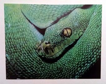 Snake Art Print -  Wildlife Art