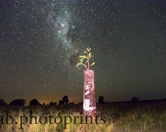 cactus, night sky, stars, milky way, farm, landscape photography, country decor, queensland, rural queensland, dead tree, stump, home decor