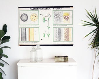 Peduncle School Chart, Pull Down Chart, Botanical Poster, Vintage Poster, Authentic, Made in Czechoslovakia, Educational Print, Home Decor
