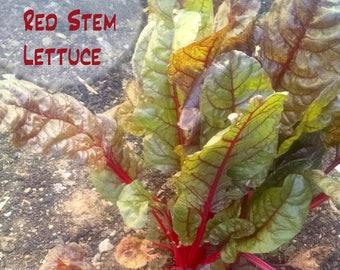 Wild Red Stem Lettuce