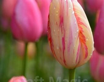 Pastel Pinks Matted Print