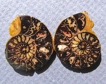 20mm L X Split Sliced and Face Polished Moroccan Ammonite Fossil Pair-17 Cts. Total  20mm L X 16mm W