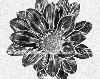 Black and White Daisy #1