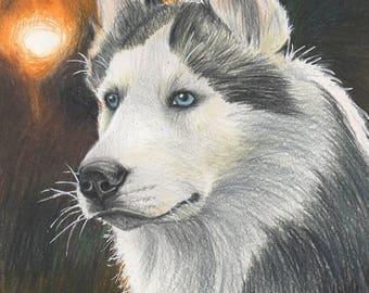 Husky Sun