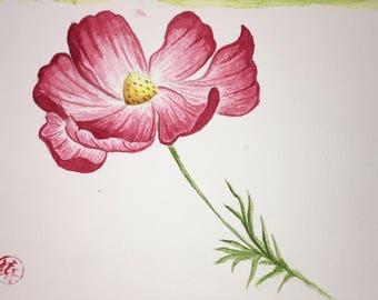 Cosmos Flower, original watercolor