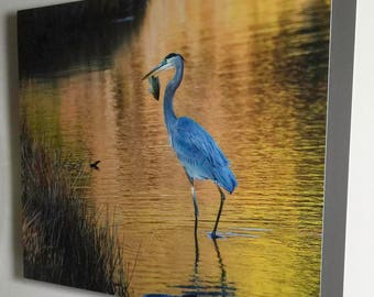 Great Blue Heron with Bluegill Fish - 5159