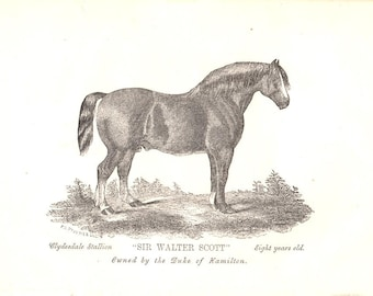 Champion Clydesdale Print - 1863
