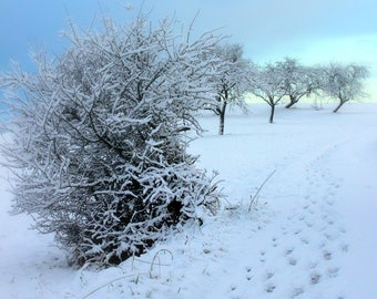 Winter Walk - snow - winter - landscape - snowscape - digital - download - photo - tracks - path - ice -cold