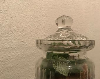 Enclosed terrarium