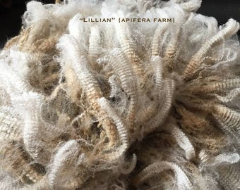 1 ounce of Raw Wool: Lillian a CVM Romeldale hogget