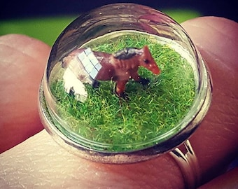 Horse in the Field Ring