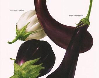 Set of 2 Vintage Vegetable Prints Eggplant Leek 1970s Illustrated Color Plates Book Pages